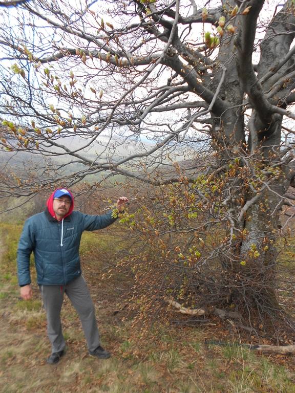 Дерево Рода